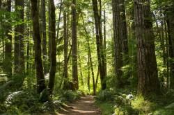 Miškų pardavimai